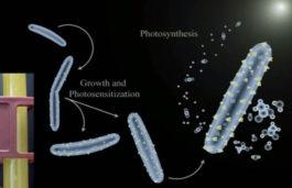 Cyborg Bacteria Can Harvest Solar Energy to Produce Fuel