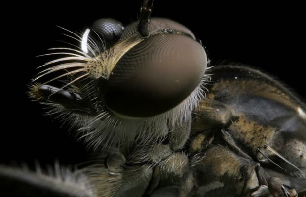 Insect Eyes Inspire New Solar Cell