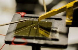 New Research Brings Us Closer to Cheap, Transparent, Organic Solar Cells