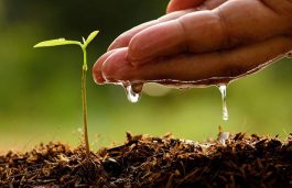 Magenta Power Launches 'Grow Green' Initiative for Sapling Plantation