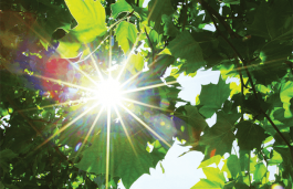 Scientists Use Plant Bacteria to Harness Sunlight