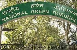 NGT Worried Over Lack of Policy on Antimony-Coated Solar Panels Disposal
