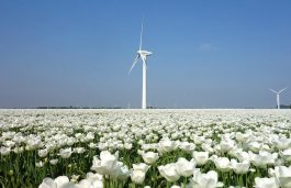 Dutch Plan to Cut Emissions by Half and Raise Renewable Capacity by 2030