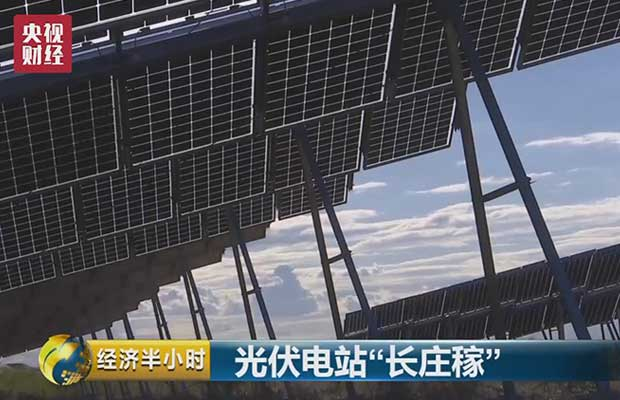 good crops on photovoltaic power stations