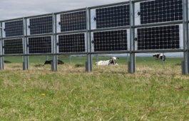 Tenders Issued for Solar Plants for Agro-PV-Concept at NISE Gurugram