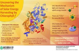 Chlorophyll Molecule Could Be Key to Better Solar Cells: Study